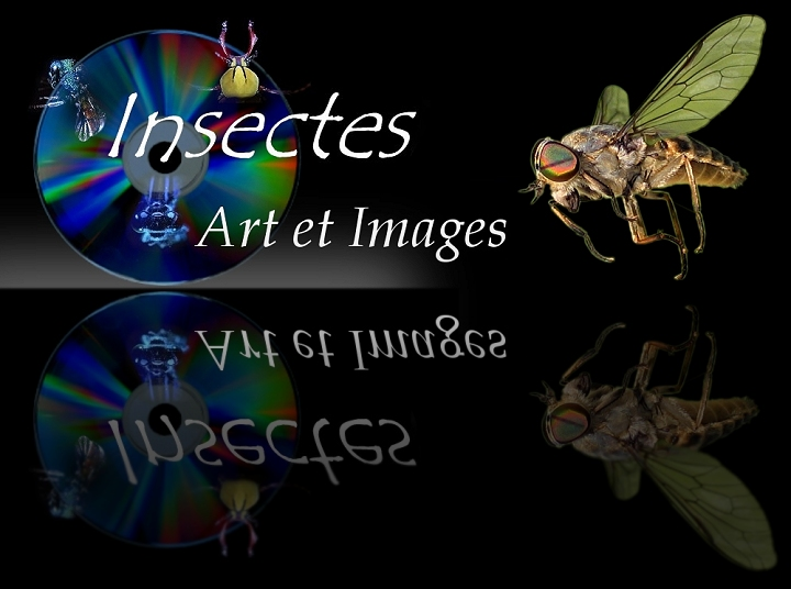 Le cd-rom INSECTES