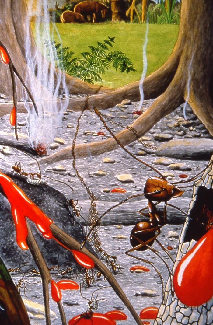 Les fourmis et le piège d'ambre