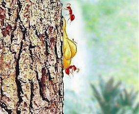 Le piège de la résine attrape des fourmis